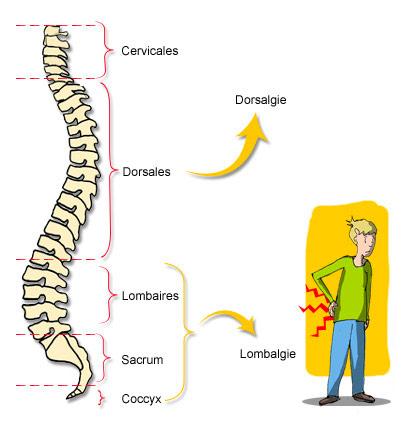 Colonne vertebrale homme