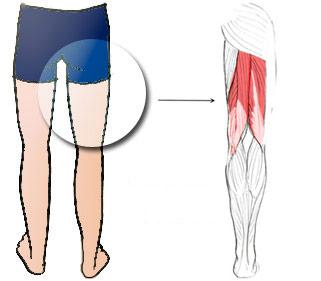 Muscles ischio-jambiers