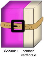 La ceinture solidarise en bloc l'abdomen et la colonne vertébrale