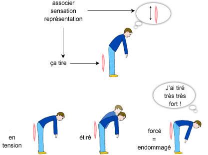 Exercices d'assouplissement