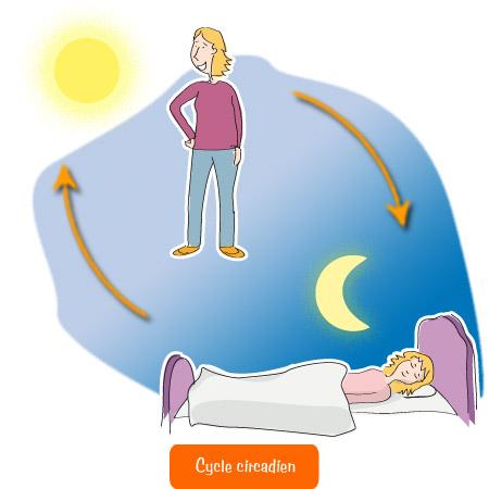 Lombalgie - Intérêt du sommeil