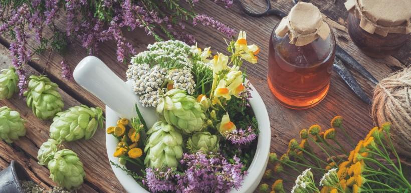 Des plantes médicinales contre le mal de dos